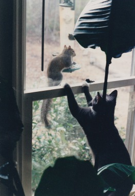 Stella goes after a squirrel trying to steal bird food.