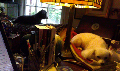 Maebelle liked to stay close to me while I was writing; Tallulah is keeping watch